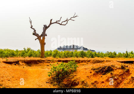 Single tree without leaves on a sky background at sunset or sunrise,This photography is taken in as landscape style.This photograph - Stock Photo