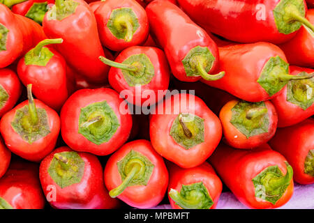 Stack of red poblano peppers for sale in market - Stock Photo