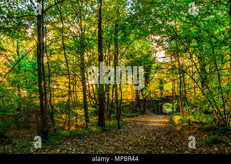 A bridge at Baggeridge Country Park in the West Midlands. - Stock Photo