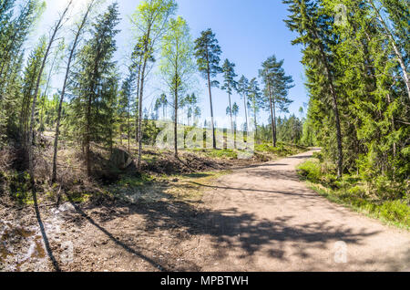 Forest harvesting in Lillomarka close to Oslo, Norway, in sunny spring day. - Stock Photo