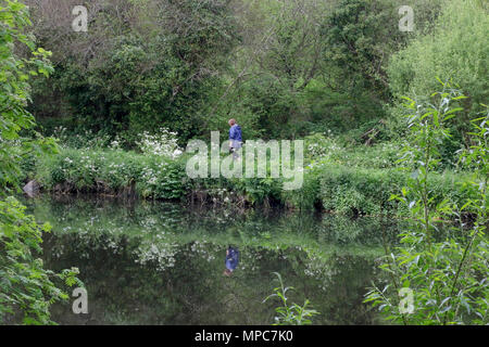 Lagan Towpath, Belfast, Northern Ireland. 22 May 2018. UK weather - after a grey morning and early afternoon, the sun eventually broke through thr clouds to set up a bright finish to the day. A woman and dog walking on the Lagan Towpath. Credit: David Hunter/Alamy Live News. - Stock Photo