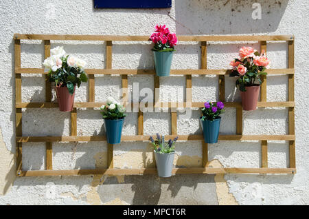interesting wooden shelf for flower pots  with colorful  flowers on white wall of the house, outdoor decoration - Stock Photo