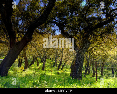 Views from the A-375 within the Parque natural de la Sierra de Grazalema, Andalucia, Spain - Stock Photo
