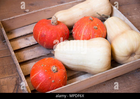 Orange and white pumpkins in wooden box - Stock Photo