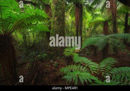 New Zealand rainforest details landscape picture - Stock Photo