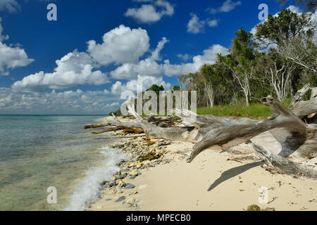 Tropical beach on the Caribbean - Stock Photo