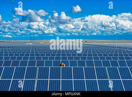 A man checks the solar panels on a solar farm in South Africa - Stock Photo