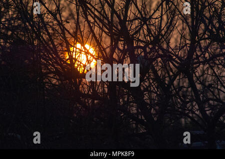 Late sun sinking behind trees and brush with football nestled between branches - Stock Photo