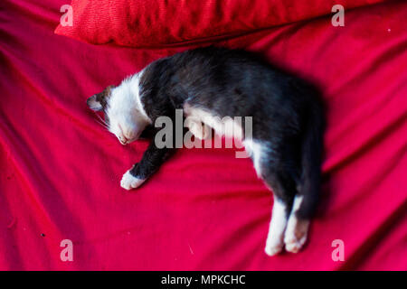 Lazy cat relaxig in local restaurant on Don Det island in south Laos. Life on four thousands islands Si Phan Don on Mekhong river in south east asia d - Stock Photo
