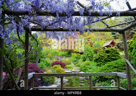 Purple Flowers and Bridge by Japanese Garden Pond in the Rain Stock ...
