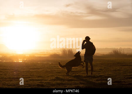 Silhouette of woman and dog walking on sunset background. - Stock Photo