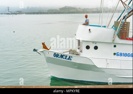 Newport, Oregon,USA - August 23, 2016: A fishing boat enters Newport harbor guided by its captain seen on the pilot deck and a dog stand lookout over  - Stock Photo