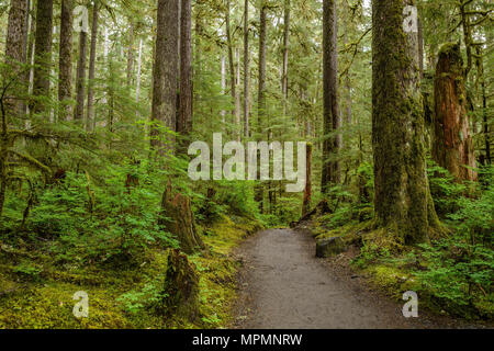 In Forest - A hiking path curving through a dense and wet rain forest. - Stock Photo