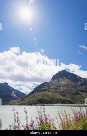 Austria, Vorarlberg, Alpen, Silvretta dam and Bielerhohe, fireweed flowers in foreground, Epilobium angustifolium - Stock Photo