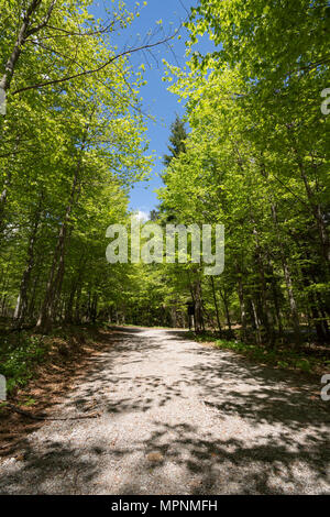 Gravel road through the sunlit lush green forest in Gorski kotar, Croatia - Stock Photo