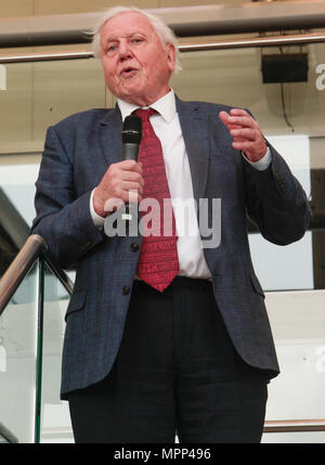 London UK 24 May 2018 Sir David  Attenborough best known for writing and presenting, in conjunction with the BBC natural and wildlife programs ,opening the ABA Rare Book Fair London 2018@Paul Quezada-Neiman/Alamy Live News' - Stock Photo