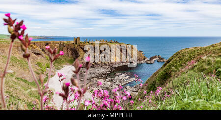 Scotland, Aberdeenshire, Ruins of Dunnotar Castle at the sea - Stock Photo