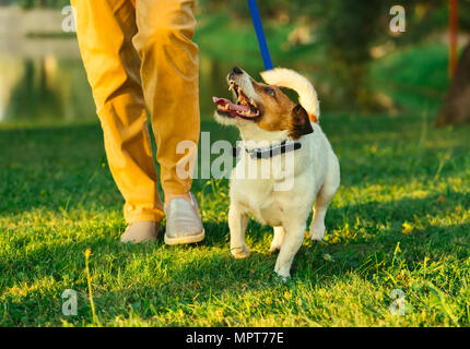 Dog walking on leash with woman during  evening stroll at park - Stock Photo