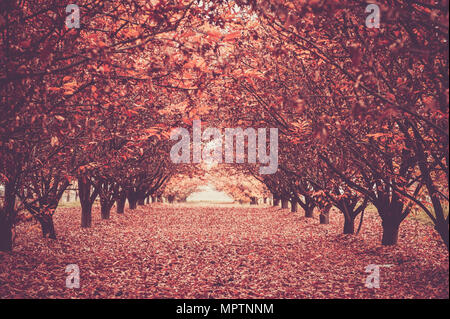 long road in the middle of the magic forest. Autumn season outdoor. Red tones and trees both sides. Light at the end. - Stock Photo
