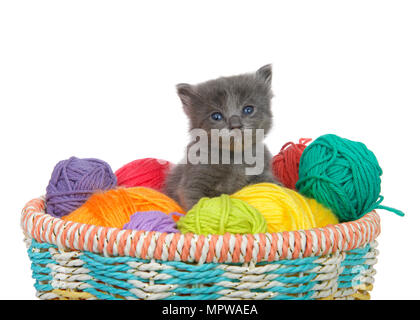 Three week old grey kitten sitting in a basket of yarn balls in multiple colors looking at viewer. Isolated on white background. - Stock Photo
