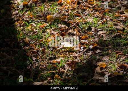Brown autumn leaves on grass. - Stock Photo