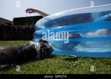 Inflatable paddling pool: unidentifiable boys playing in an inflatable paddling pool as the family dog looks on - Stock Photo