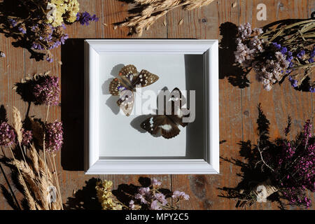 Overhead view of artificial butterflies on white frame amidst flowers - Stock Photo