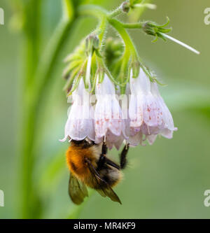 Nature Birds and Bees - Stock Photo