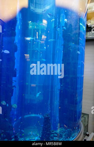 Photograph taken of the AquaDom in Berlin, Germany, is a 25 m (82 ft) tall cylindrical acrylic glass aquarium with built-in transparent elevator. It is located at the Radisson Blu Hotel in Berlin-Mitte. - Stock Photo