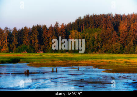 The light from the rising sun, golden hour, casts a golden glow over the forest and marsh lands near Warrenton, Oregon on the Oregon Coast. Stock Photo