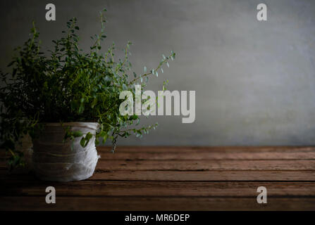 A beautiful, messy oregano plant on a worn wood table. - Stock Photo