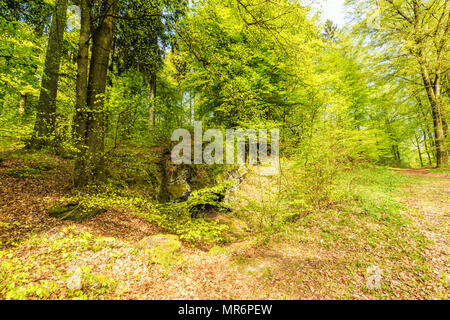 Beautiful spring forest landscape with in area of mill stone and ice caves and beech trees in volcanic Eifel at Roth, Gerolstein Germany - Stock Photo