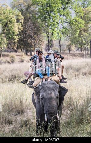 Mahout and tourists taking photographs on an Asian, or Indian Elephant, Bandhavgarh National Park, Tala, Madhya Pradesh, India - Stock Photo