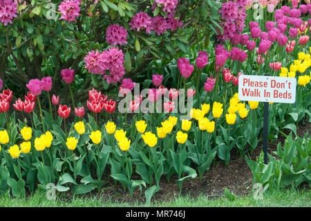 Display tulips at Roozegaarde gardens in Mount Vernon,Washington in ...
