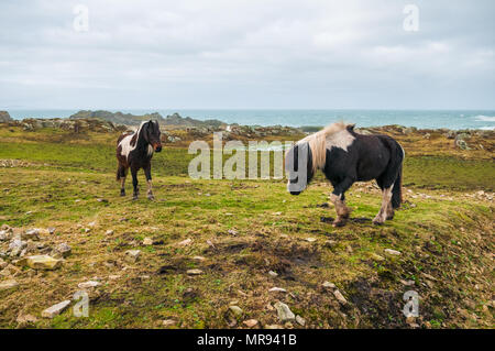 Horses on the landscape in Donegal, Ireland - Stock Photo