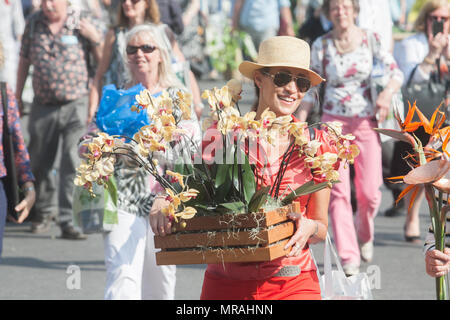London UK. 26th May 2018. Members of the public carry exhibitors plants on the closing day of 2018 Chelsea Flower Show . A wide variety of items can purchased on the last day of the Royal Horticultural Show in Chelsea which was inaugurated in 1913 Credit: amer ghazzal/Alamy Live News - Stock Photo