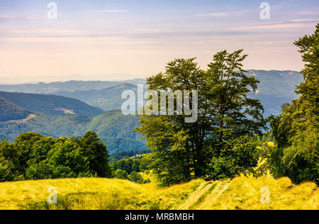 tree by the country road winding down the hill. birch forest on the grassy hillside in the distance. lovely summer landscape of Carpathian mountains. - Stock Photo