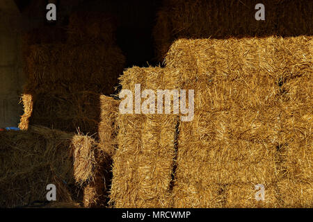 The hay storage shed full of bales hay on farm - Stock Photo