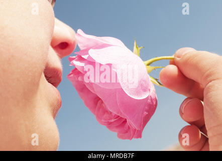 seven years old boy smelling pink rose  in spring day blue sky background - Stock Photo