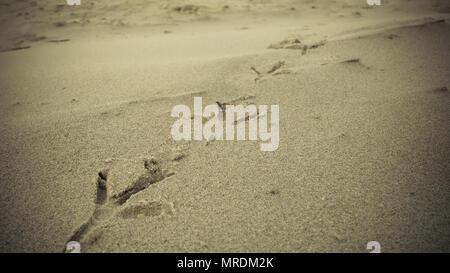 Bird footprints on sand beach.
