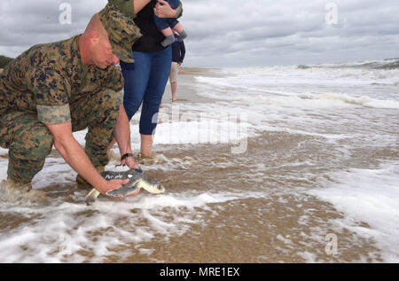 "170608-N-MS174-007 VIRGINIA BEACH, Va. (June 8, 2017) Gunnery Sgt. Paul Worley releases ""Purple Heart,"" a Kemp's ridley sea turtle, back into the Atlantic Ocean after being rehabilitated from a fishing hook. Worley, attached Command Marine Corps Security Cooperation Group at Joint Expeditionary Base Little Creek-Fort Story, is a Purple Heart recipient. ""Purple Heart"" is equipped with a U.S. Navy-funded satellite tag used to track the turtle's movements and the release was conducted as part of a Navy research project with the Virginia Aquarium and Marine Science Center. (U.S. Navy photo by Bobb - Stock Photo"