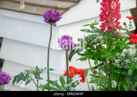 Cottage garden flower display in front of a bee hive at a flower show. UK - Stock Photo