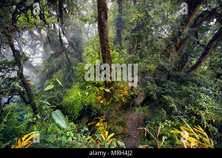 Beautiful landscape of high trees of Subtropical foggy forest of Annapurna trek in Nepal - Stock Photo