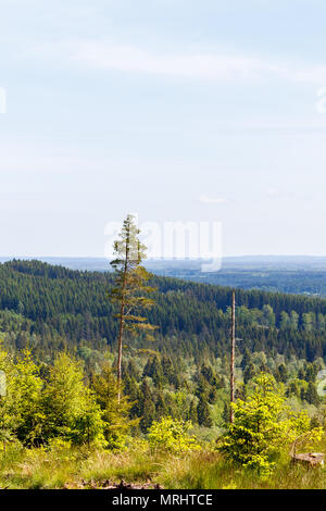 View of a forest in a rolling landscape - Stock Photo