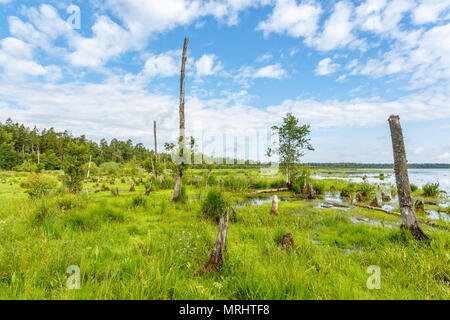 Wetland at a lake with dead trees and stumps - Stock Photo