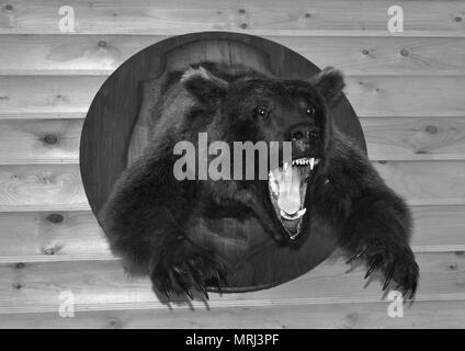 Black and white photo-a fierce bear with a horrible open mouth in the form of a Scarecrow on a log wall - Stock Photo