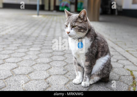 A fluffy cat with collar sits on the street. Alone cat - Stock Photo
