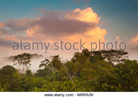 Beautiful sunrise in the rainforest of Soberania national park, Republic of Panama. - Stock Photo