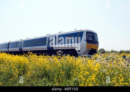 Chiltern Railways class 165 train passing lineside flowers, King`s Sutton, Northamptonshire, England, UK - Stock Photo