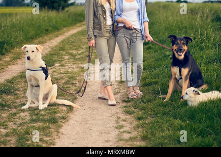 Two women walking their dogs on a rural dirt road in a close up cropped view of their bodies and the three dogs resting - Stock Photo
